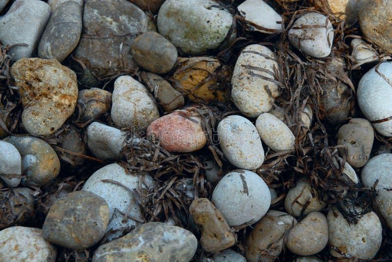 Schließen Sie herauf Farbrunde Steine mit Algen lizenzfreies stockfoto