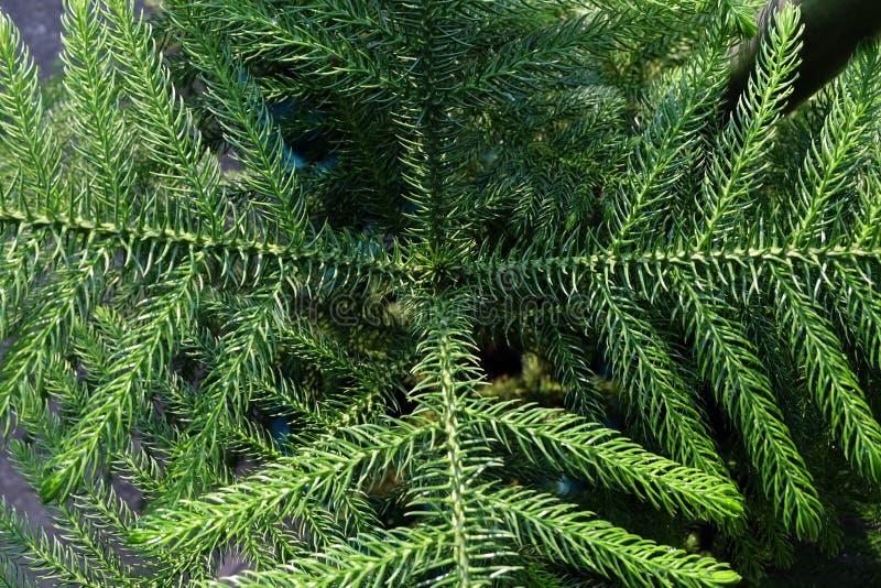 Schließen Sie herauf Farne im Wald lizenzfreie stockfotos