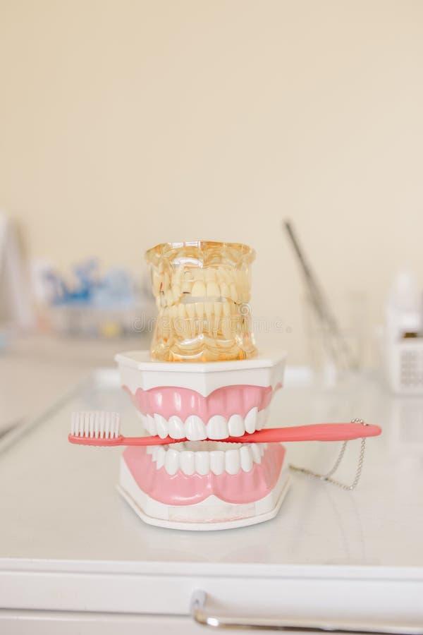 Schließen Sie herauf Foto des vorbildlichen Gebisses mit zwei Zahnzähnen mit roter Zahnbürste lizenzfreies stockfoto
