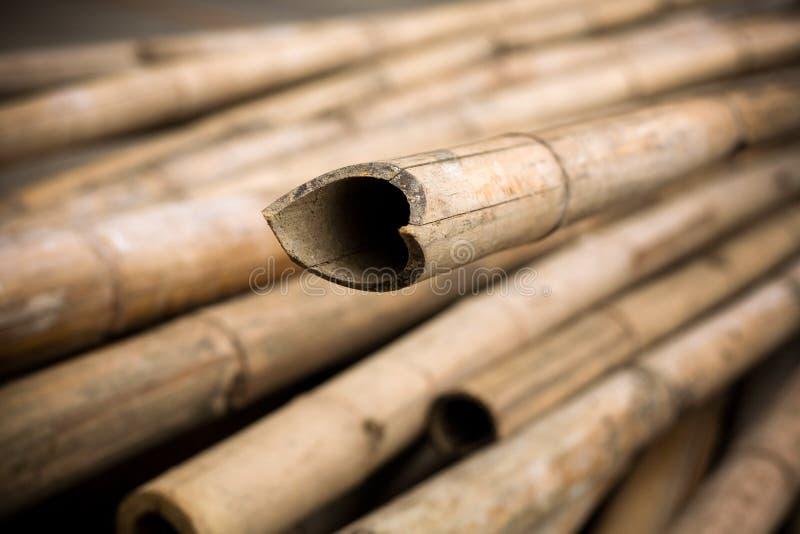Schließen Sie herauf Hintergrund von trockenen starken Bambuspfosten lizenzfreie stockbilder
