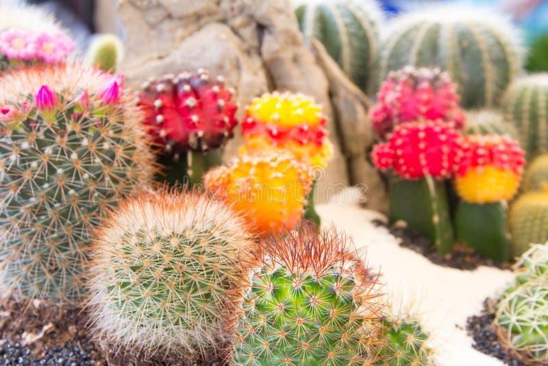 Schließen Sie herauf Kaktus stockbild