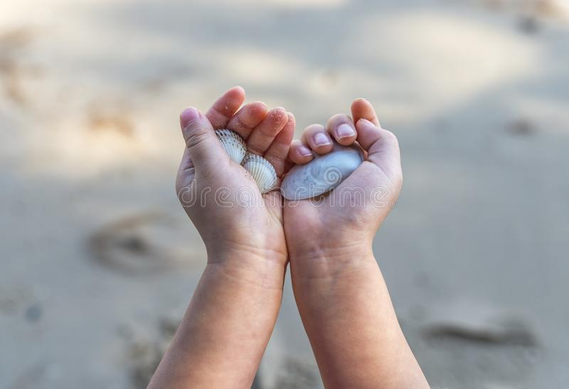 Schließen Sie herauf Kind-` s Hand, die Muschel hält stockbild