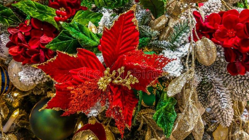 Schließen Sie herauf PFgroße Poinsettia auf Weihnachtsbaum und anderen Dekorationen lizenzfreie stockbilder