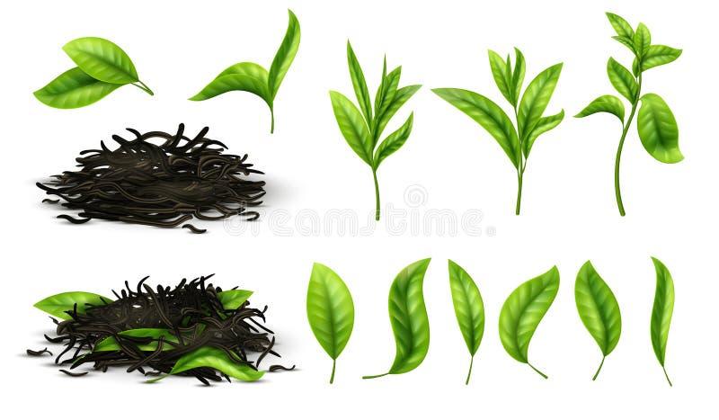 Schließen Sie herauf realistischer Tee getrocknete Kräuter und grünt Teeblätter lokalisierten Vektorsatz lizenzfreie abbildung