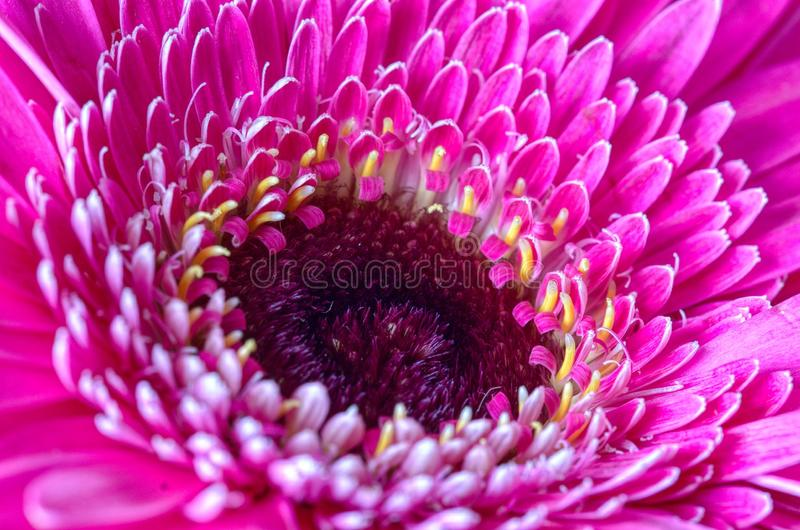 Schließen Sie herauf rosafarbene Blume stockbilder