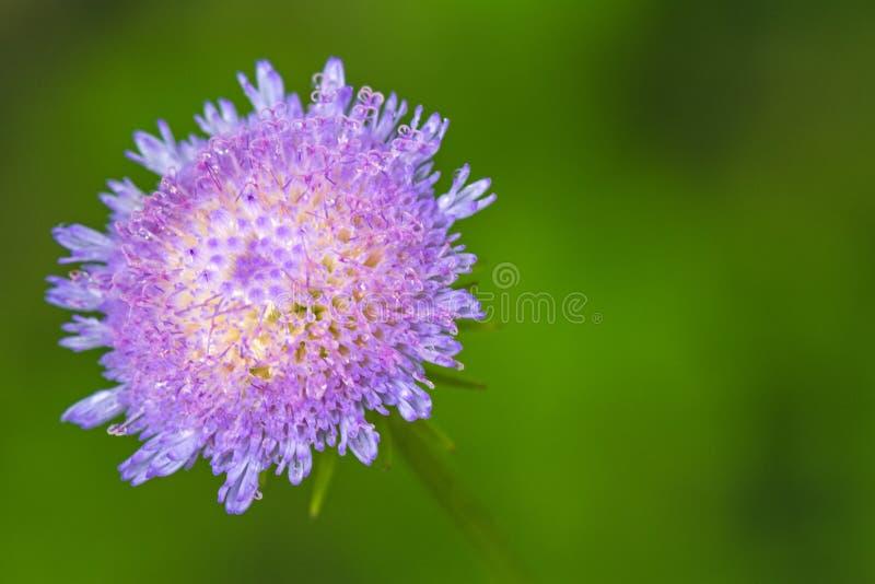 Schließen Sie herauf schöne violette Distelblume lizenzfreie stockfotografie