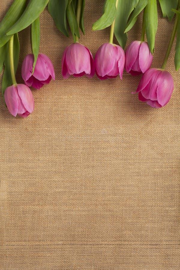 Schließen Sie herauf Schuß der rosafarbenen Tulpe lizenzfreies stockbild