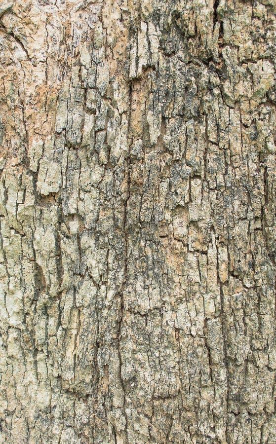 Schließen Sie herauf Schuss brauner Baumrinde Beschaffenheit lizenzfreie stockfotografie