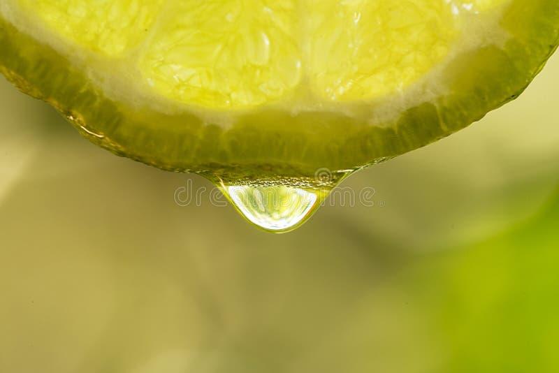 Schließen Sie herauf Schuss des Wassertropfens mit geschnittenem Kalk Kalk ist ein Hybridci lizenzfreies stockfoto