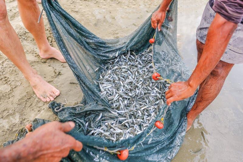 Schließen Sie herauf Schuss, Masse von den Breitlingsfischen, die in einem Netz gefangen werden stockbild