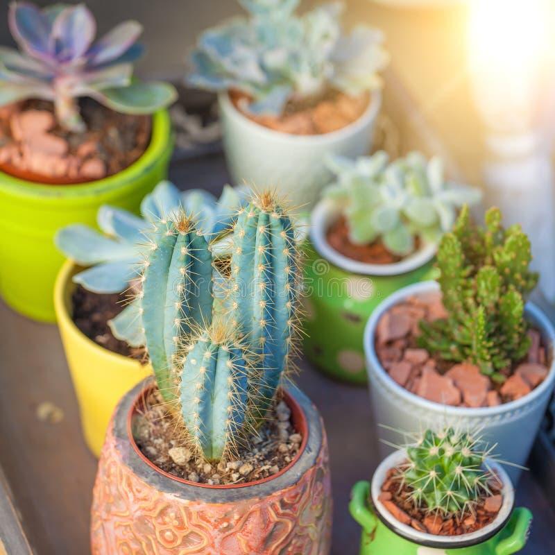 Schließen Sie herauf Succulents im Töpfe Landschaftsfeiertags-Hintergrund lizenzfreie stockfotos