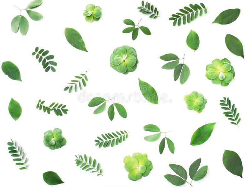 Schließen Sie herauf tropisches grünes Blattmuster stockfotos