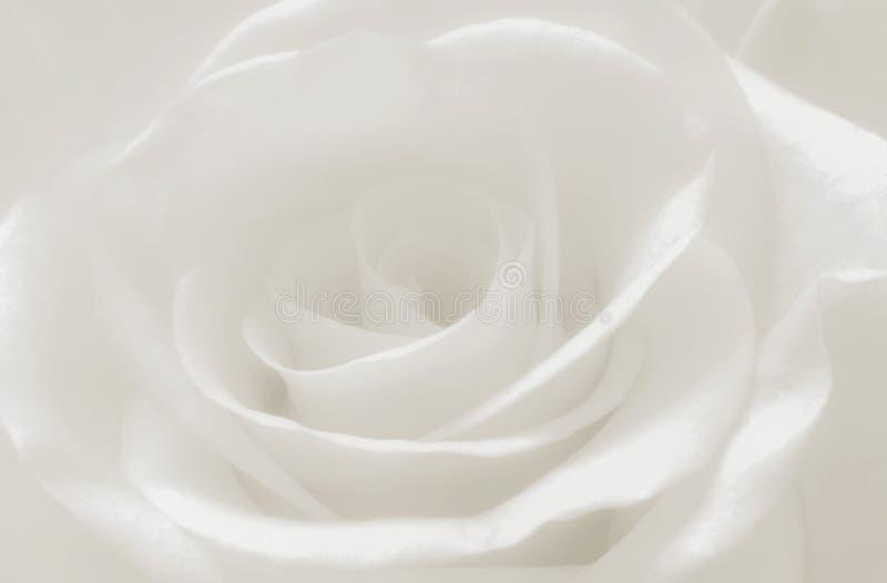 Schließen Sie herauf weiße rosafarbene Blumenblätter Makro, abstrakter weicher weißer Hintergrund stockfotografie