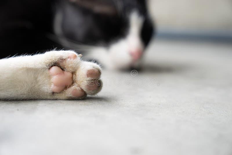 Schließen Sie herauf weißes Katze ` s Bein mit der rosa Tatze, Schlafenkatze auf Zement g lizenzfreie stockfotos