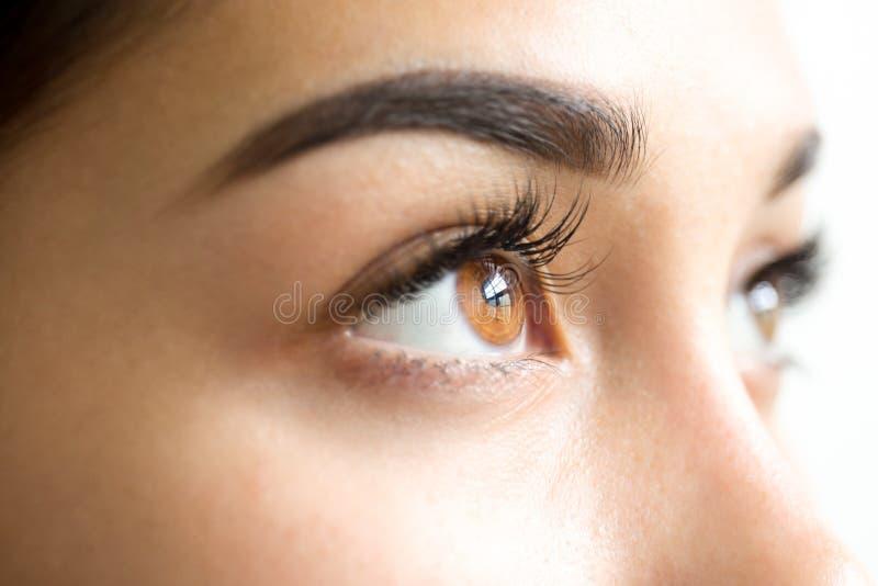 Schließen Sie herauf weibliche braune Augen mit den langen Wimpern lizenzfreies stockfoto