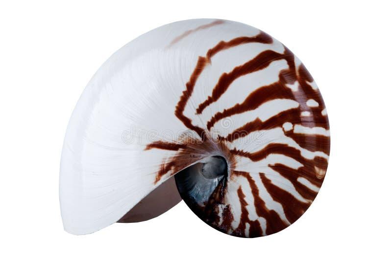 Schließen Sie Nautilus-Shell ab stockfotos
