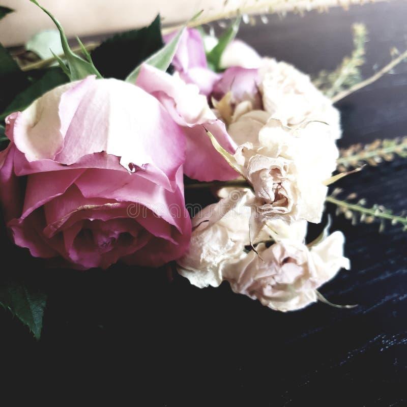 Schließen Sie oben auf altem und verwelkte große rosa Rose und kleine weiße Rosen blühen die Pedale, die aus den Grund liegen lizenzfreie stockbilder