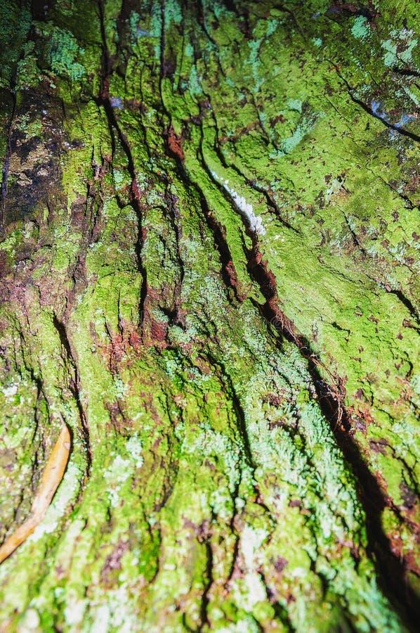 Schließen Sie oben auf einer Zerlegungsbaumrinde, die durch grünes Moos umfasst wird lizenzfreie stockfotografie