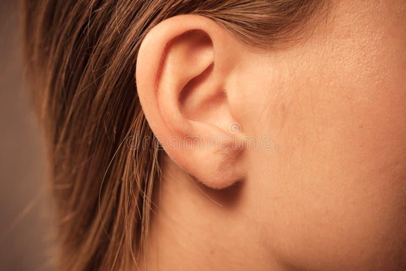 Schließen Sie oben auf weiblichem Ohr stockbilder