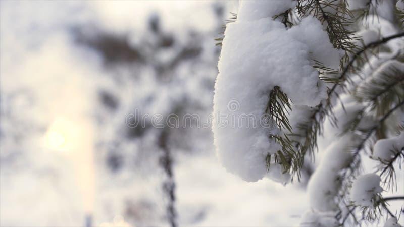 Schließen Sie oben für schneebedeckten Baumast mit dem Glänzen von unscharfen Feuerwerken auf dem Hintergrund, Weihnachtskonzept  lizenzfreie stockfotos