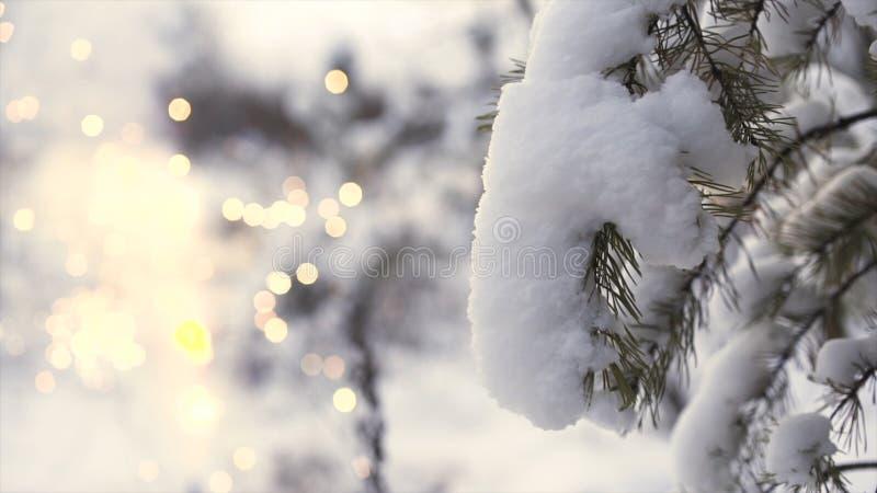 Schließen Sie oben für schneebedeckten Baumast mit dem Glänzen von unscharfen Feuerwerken auf dem Hintergrund, Weihnachtskonzept  lizenzfreies stockbild