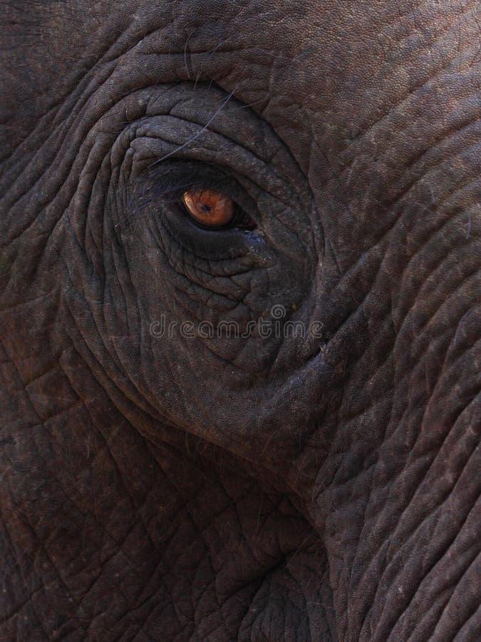 Schließen Sie oben vom Auge des Elefanten lizenzfreies stockbild