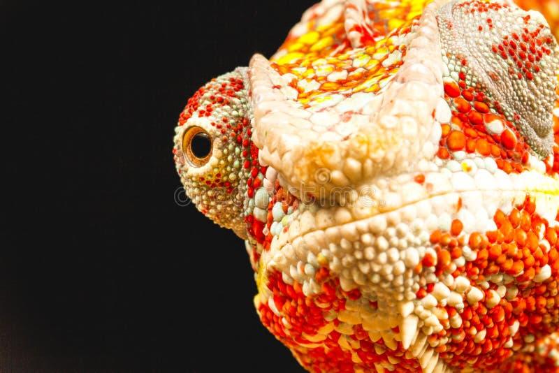 Schließen Sie oben vom Auge eines Panther-Chamäleons (Furcifer-pardalis) stockbild