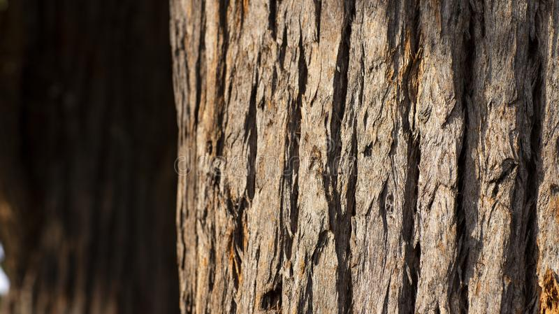 Schließen Sie oben vom Baumstamm und von seiner strukturierten Barke lizenzfreie stockfotografie