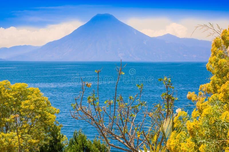 Schließen Sie oben vom bunten Gelbbetriebsbaum mit einer gorgeus Ansicht von Atitlan See, ist- der tiefste See in den ganzen Zent lizenzfreie stockbilder