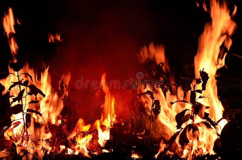 Schließen Sie oben vom Feuer gegen Schwarzes stockfotografie