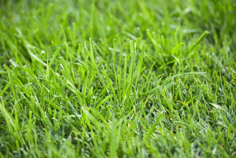 Schließen Sie oben vom frischen grünen Gras stockfotografie
