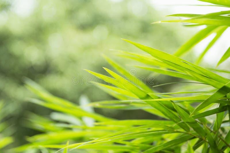 Schließen Sie oben vom grünen Blatt Grüne frische Anlagen auf Naturhintergrund stockfotografie