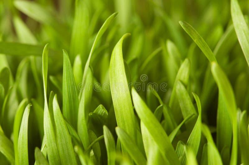 Schließen Sie oben vom grünen Gras - flache Schärfentiefe stockfotos