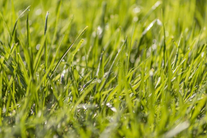 Schließen Sie oben vom Gras und vom Tau stockbilder