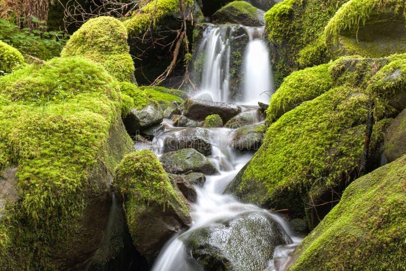 Schließen Sie oben vom kleinen Wasserfall und von den moosigen Felsen stockfotos