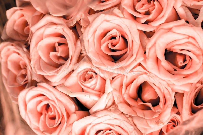 Schließen Sie oben vom rosa rosafarbenen Blumenpastellblumenstrauß mit dem rosa Blumenblatt stieg bester Pastelltonhintergrund jp stockfoto