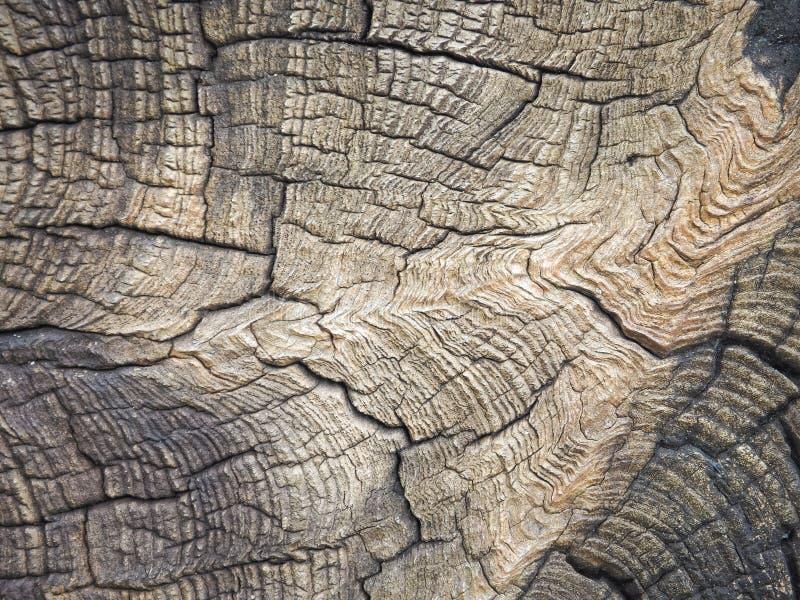 Schließen Sie oben vom schönen gemaserten Schnittbaumstumpf lizenzfreie stockbilder