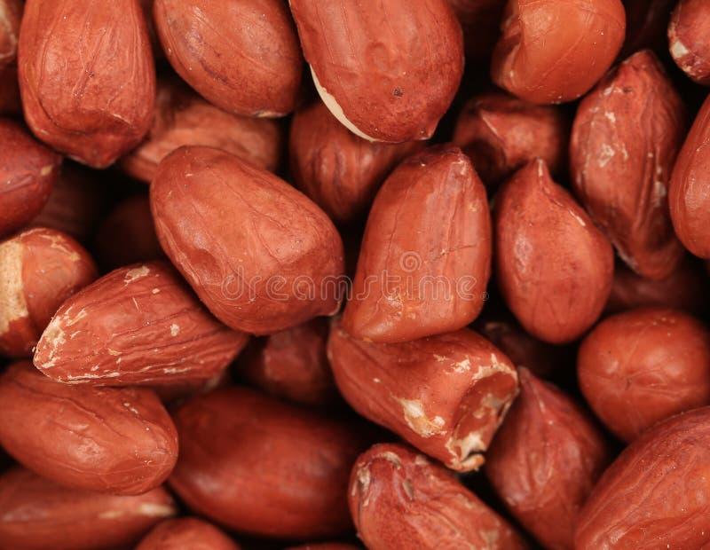 Schließen Sie oben von abgezogenen Erdnüssen. stockfoto