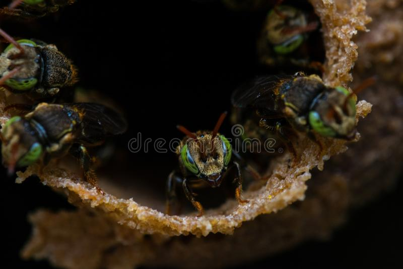 Schließen Sie oben von den Bienen stockbilder