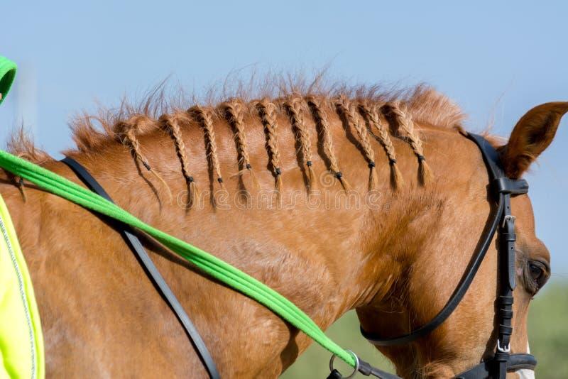 Schließen Sie oben von den Borten auf der Mähne eines Brown-Pferds auf Unschärfe-kampierendem Hintergrund lizenzfreie stockbilder