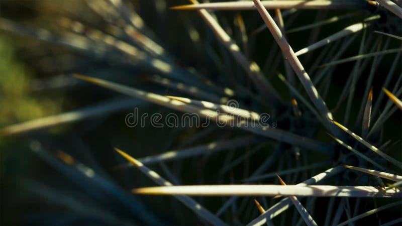 Schließen Sie oben von den Kaktuskakteen in der heißen Wüste mit Dornen und den Dornen stockfoto