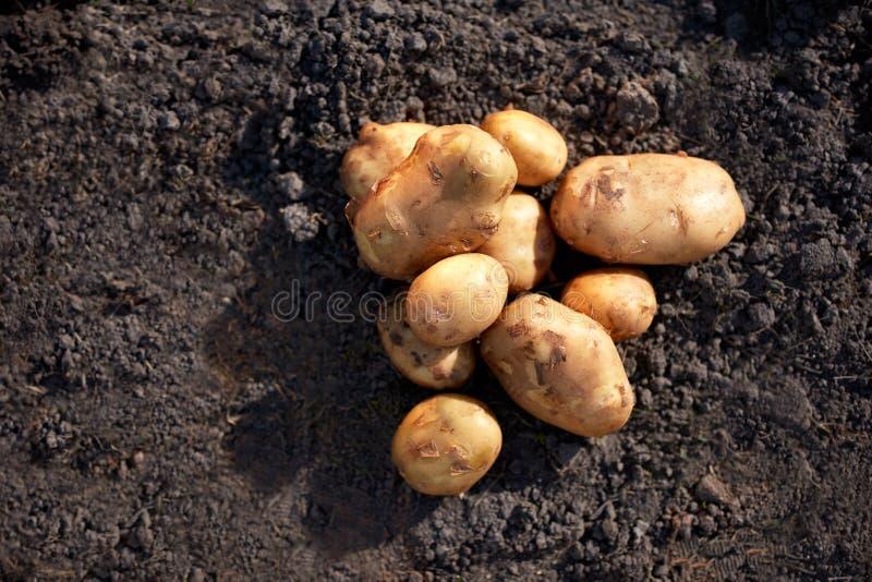 Schließen Sie oben von den Kartoffeln stockfotos