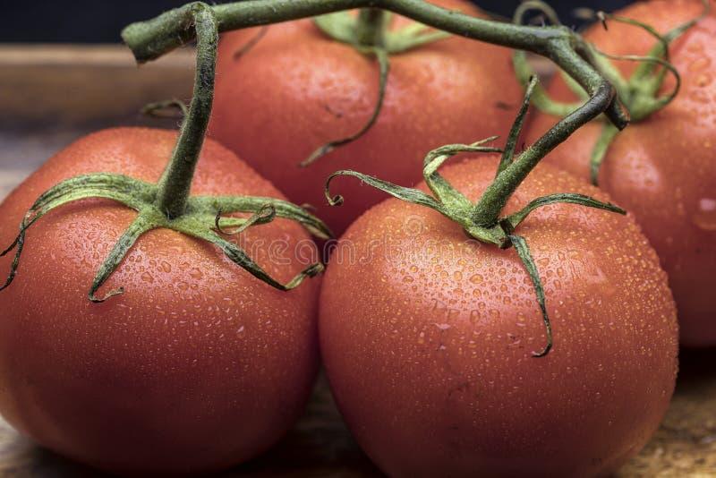 Schließen Sie oben von den Rebreifen Tomaten lizenzfreies stockfoto