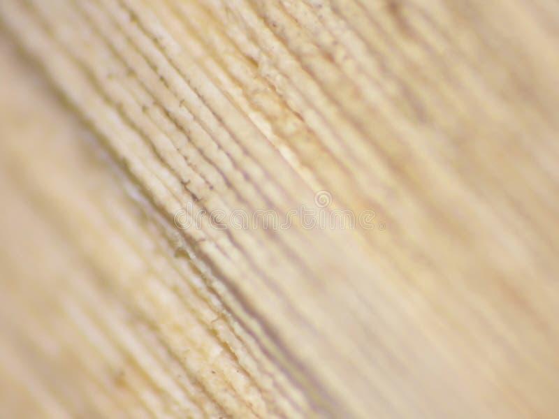 Schließen Sie oben von den Seiten unter Verwendung Makrolinse lumix Kamera stockfoto