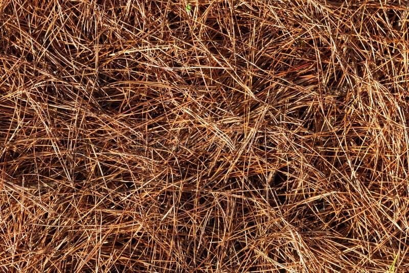 Schließen Sie oben von den Tannennadeln im Fall in die Waldhintergrund-Beschaffenheitstapete lizenzfreies stockbild