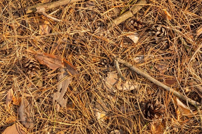 Schließen Sie oben von den Tannennadeln und -kegeln im Fall in das Waldbac lizenzfreies stockbild