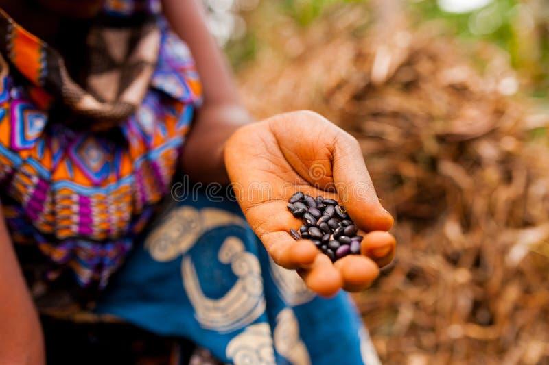 Schließen Sie oben von der Frau in der traditionellen afrikanischen Kleidung, die schwarze Bohnen beim Arbeiten im Bauernhof im c lizenzfreie stockfotografie