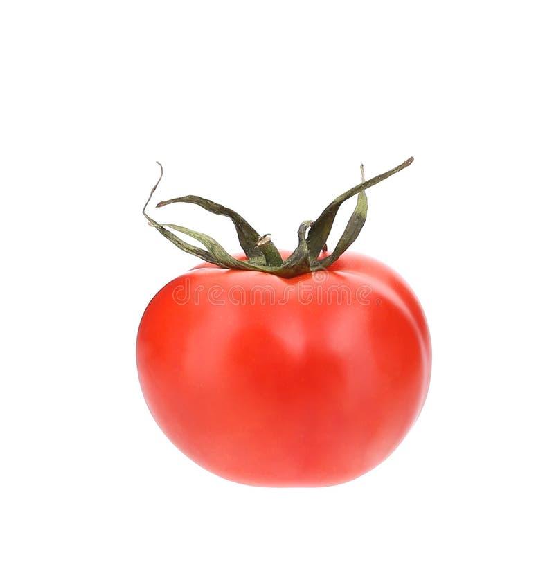 Schließen Sie oben von der frischen Tomate lizenzfreie stockfotos