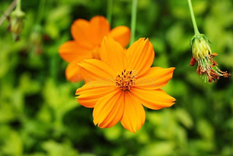 Schließen Sie oben von der Makrophotographie der orange Farbblume lizenzfreies stockfoto