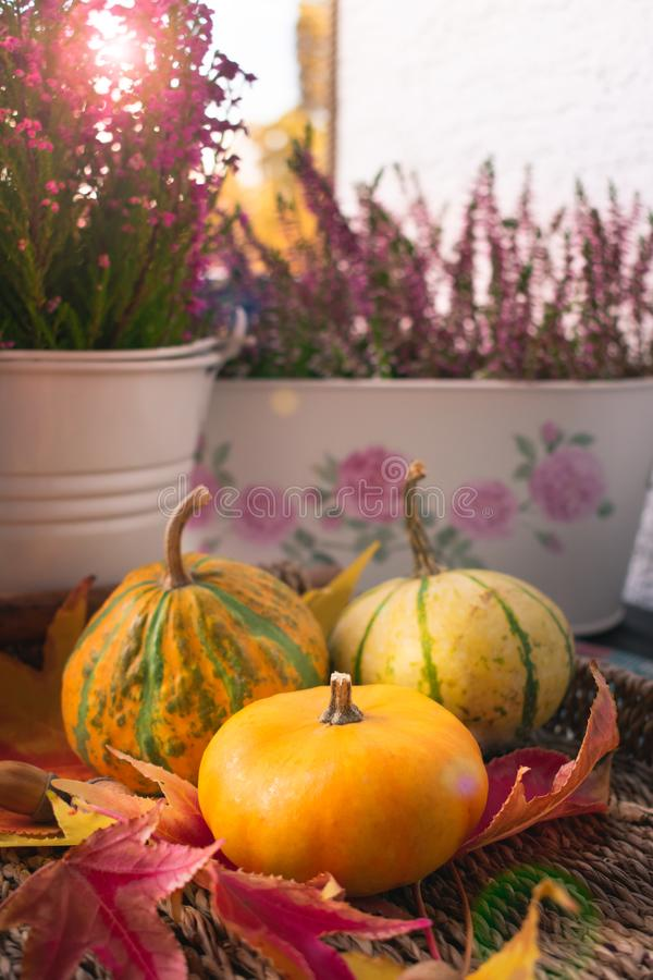 Schließen Sie oben von der Orange, von den gelben und grünen Kürbisen und von den Herbstblumen stockbild